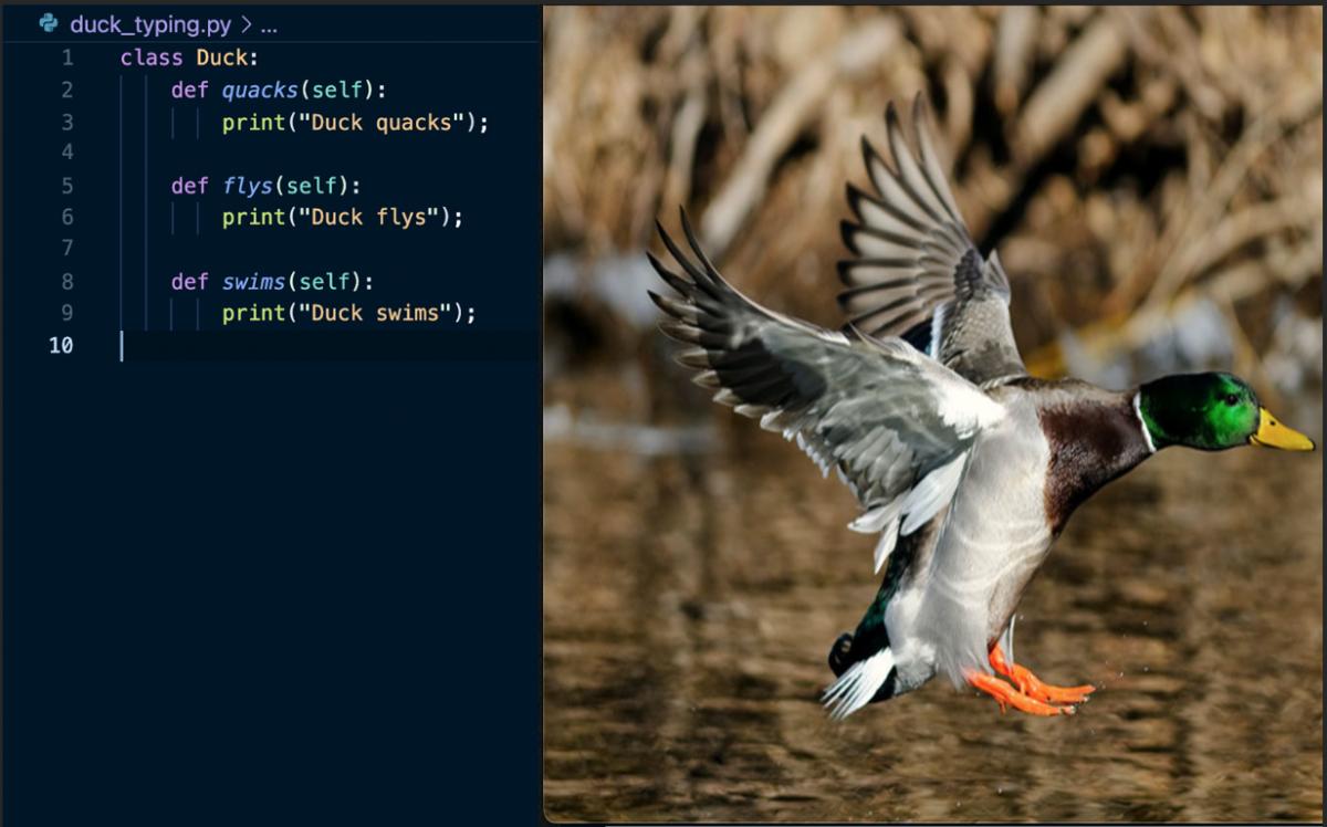 Duck_in_Python